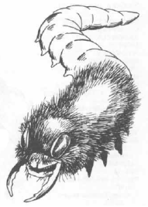 Tenebrous Worm